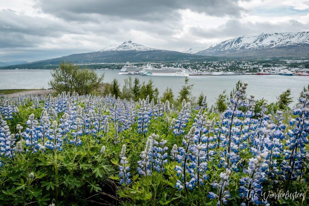 fleur devant lac Akureyri