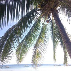 cocotier sur plage