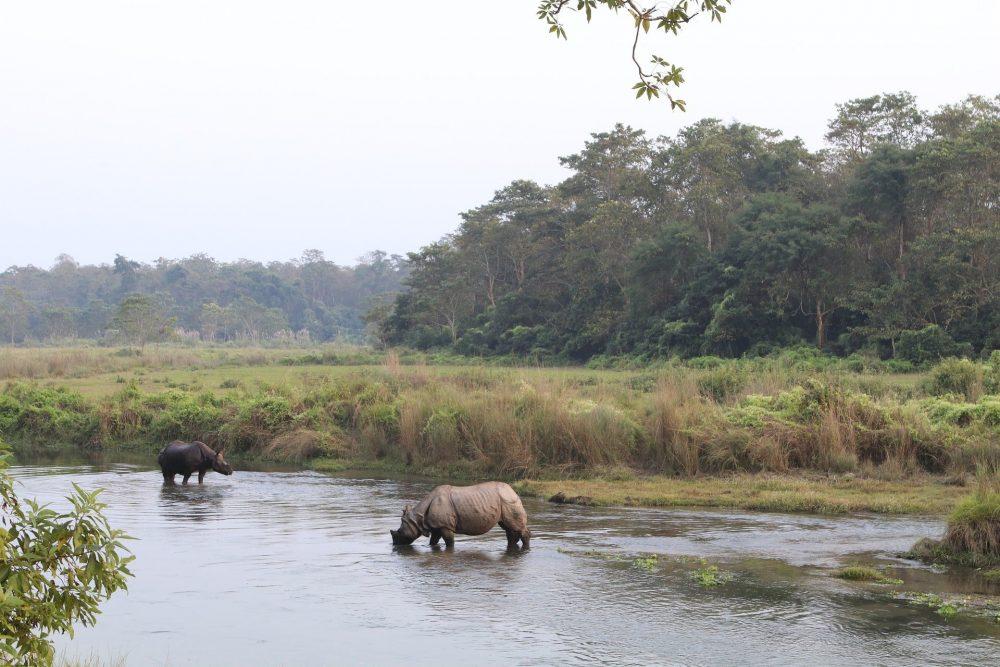 rhinoceros de chitwan nepal