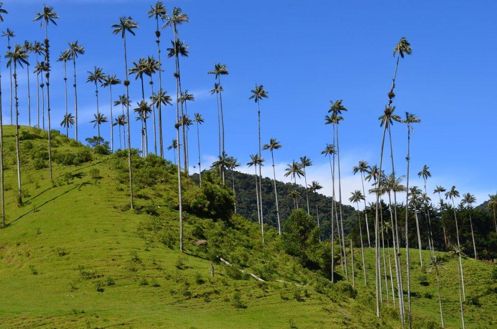 vallee Cocora en colombie