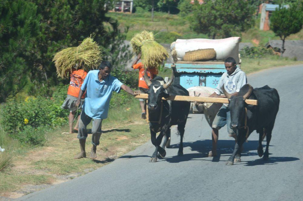 charette route madagascar
