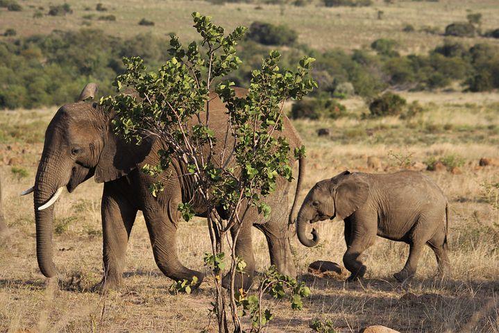 Pilanesberg en afrique du sud