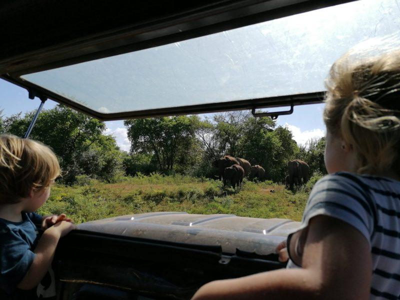 safari en famille au sri lanka avec deux enfants