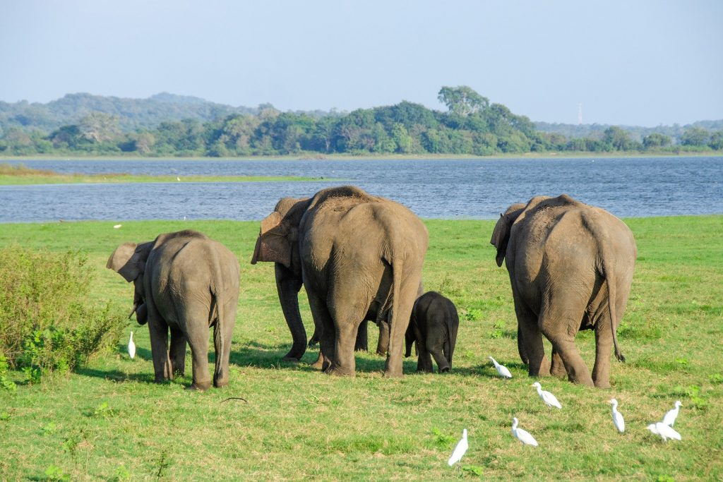famille d'éléphants au sri lanka voyage famille