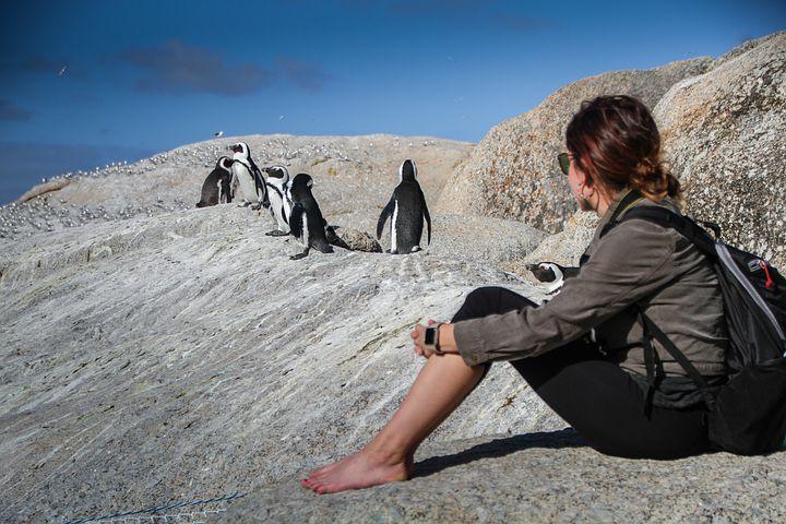 observation des pingouins en afrique du sud