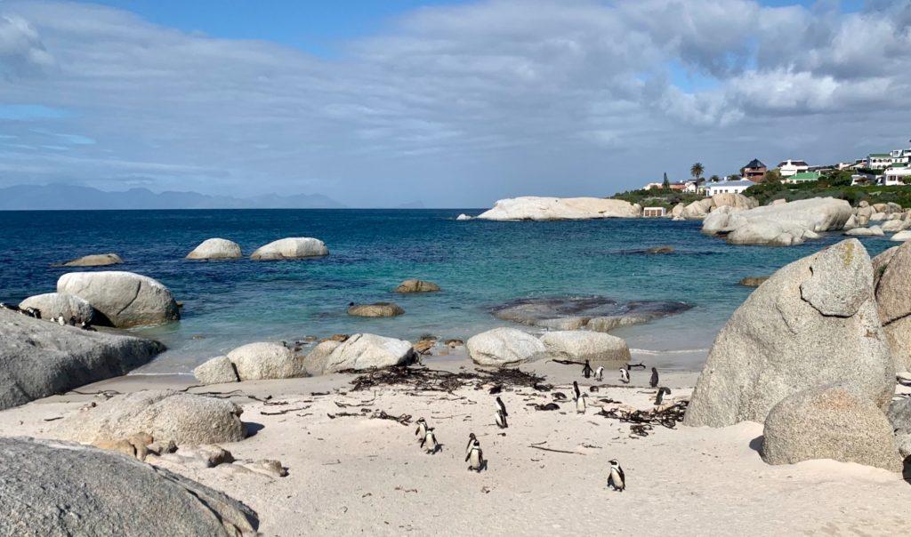 boulders beach en afrique du sud