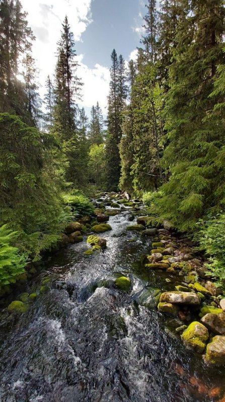 paysage nature en suède