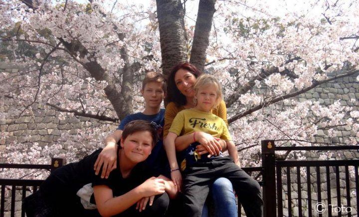 famille devant un cerisiers en fleurs au japon