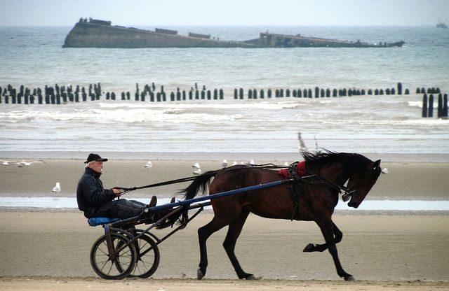 cheval sur une plage en normandie voyage en famille