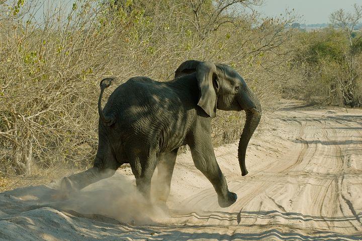 éléphant dans le désert en namibie