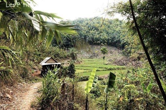 rizière au laos voyage en famille