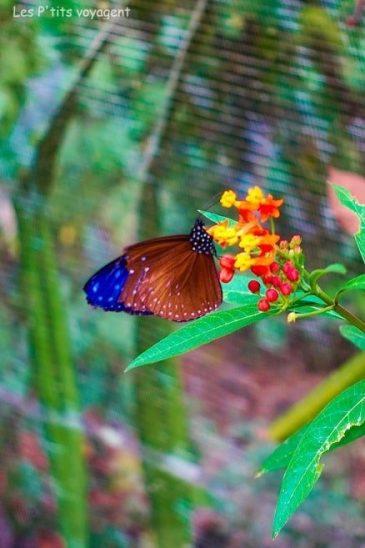 papillon au laos voyage en famille