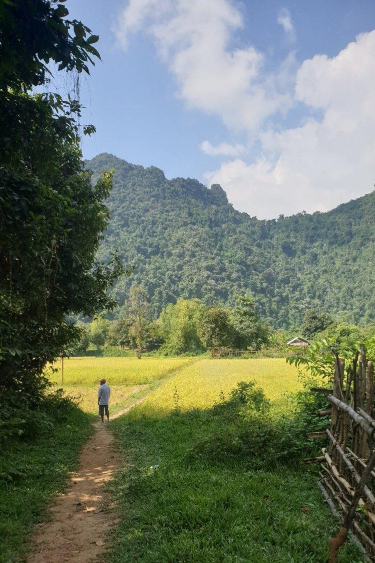 rizières au laos voyage en famille