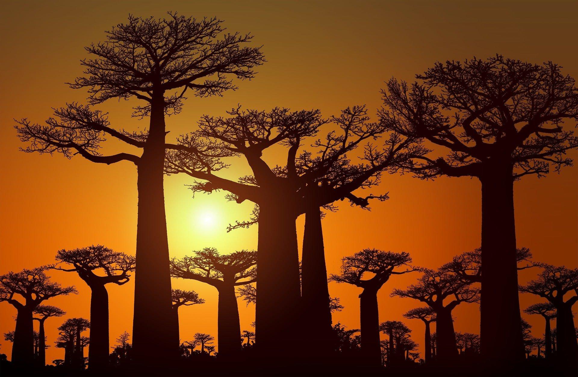 Sunset au milieu des baobab à Madagascar voyage en famille