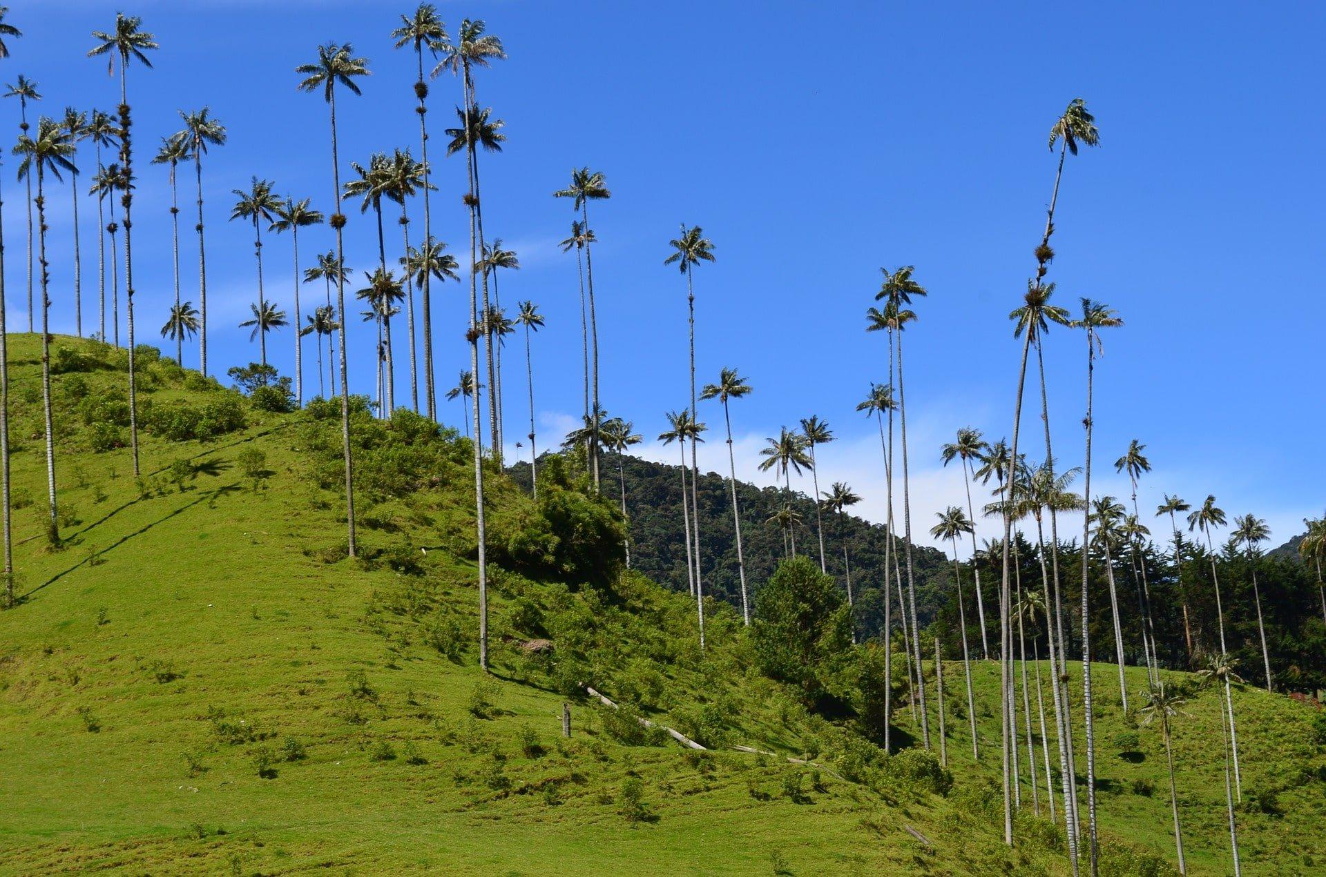 vallée de cocora en colombie voyage en famille