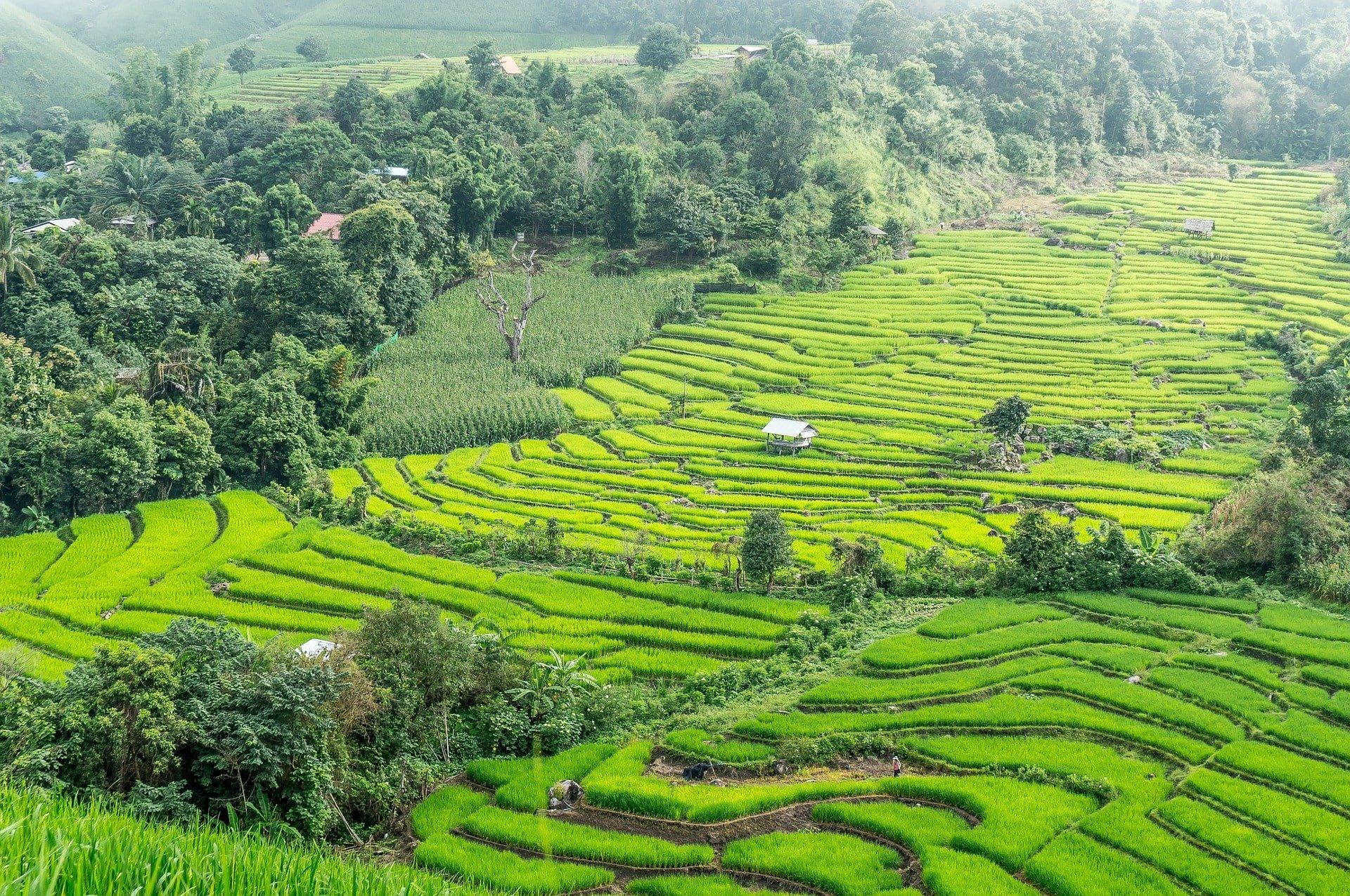 rizières en terrasse thailande voyage en famille