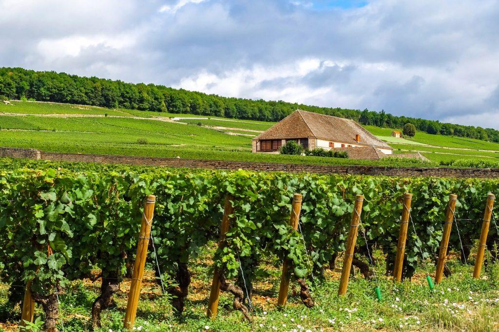 vignes en bourgogne franche comte france voyage en famille