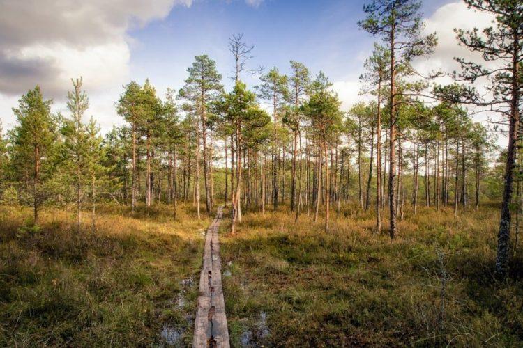 parc de lemmenjoki finlande voyage en famille