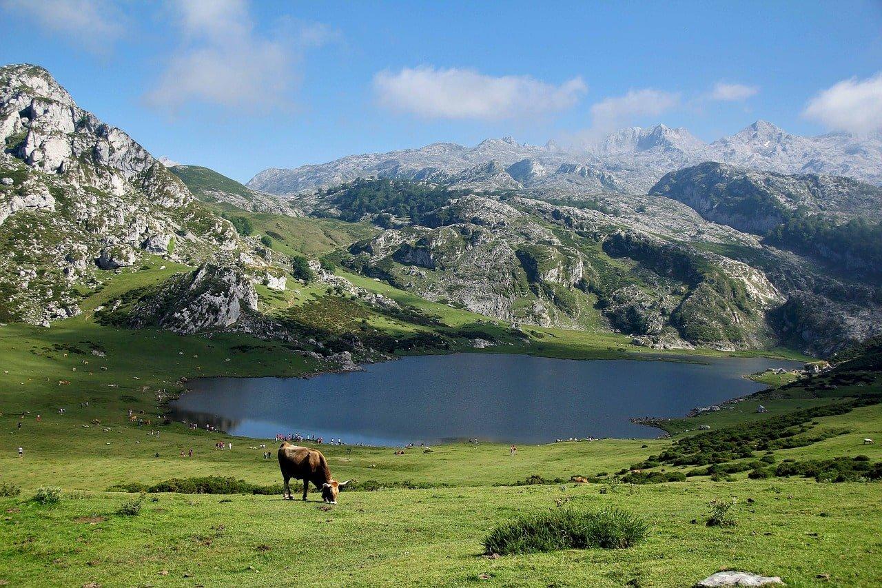 vache devant un lac dans les pyérénées