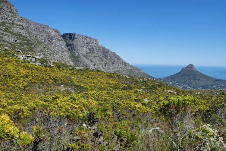 point de vue sur l'océan depuis table cap en afrique du sud