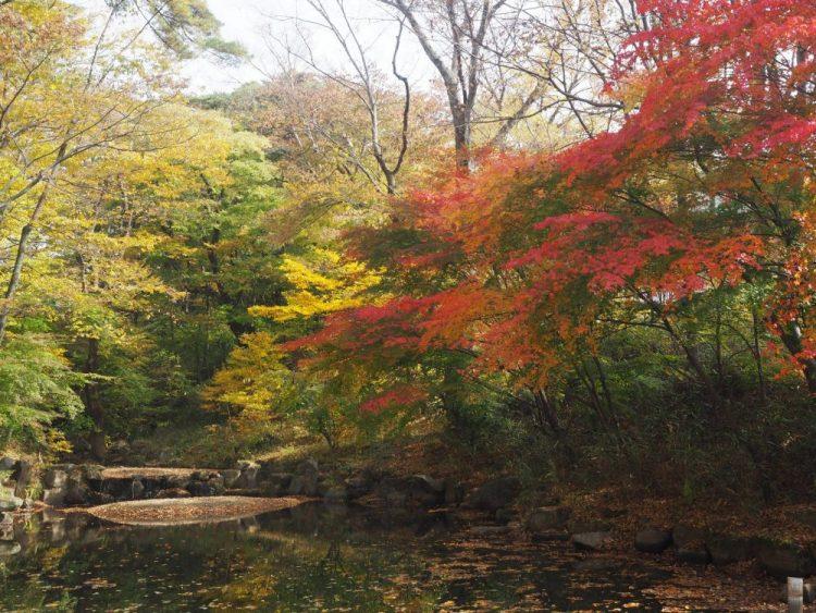 nature flamboyante coree en automne