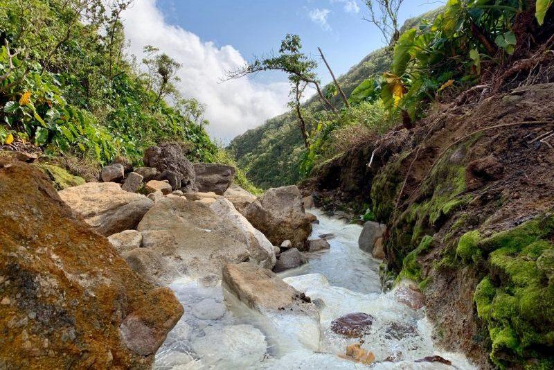 rivière au milieu de la forêt
