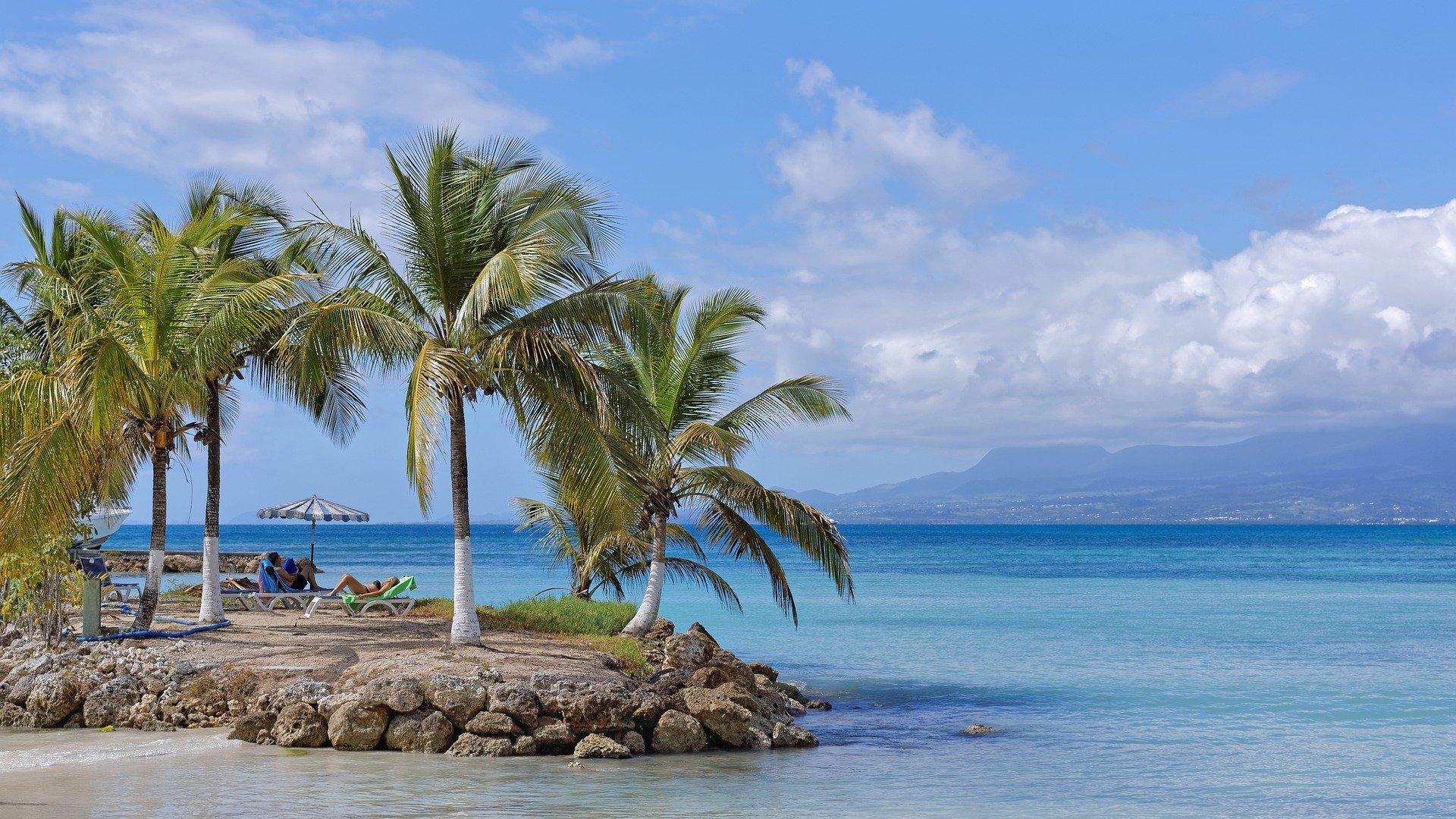 cocotiers sur la plage en guadeloupe