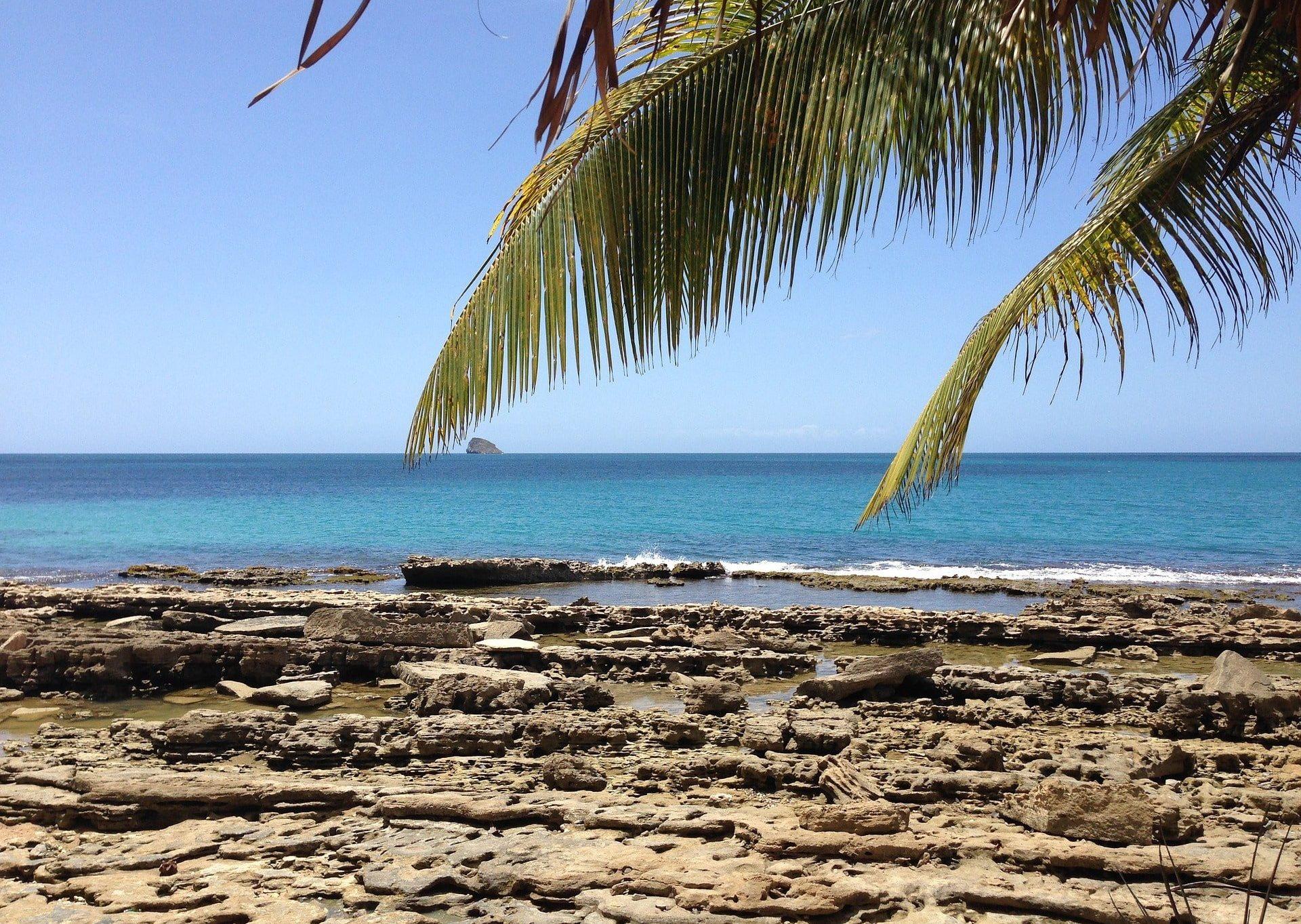 palmier sur la plage vue mer guadeloupe