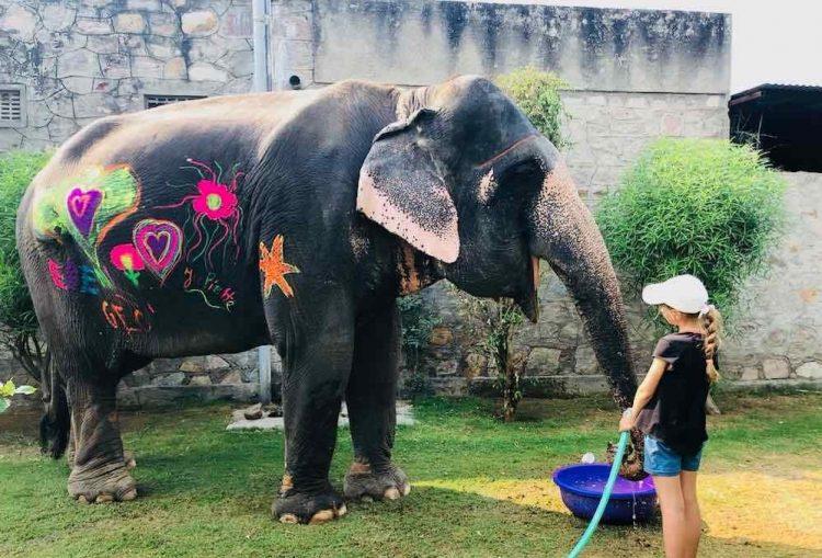 éléphant en inde