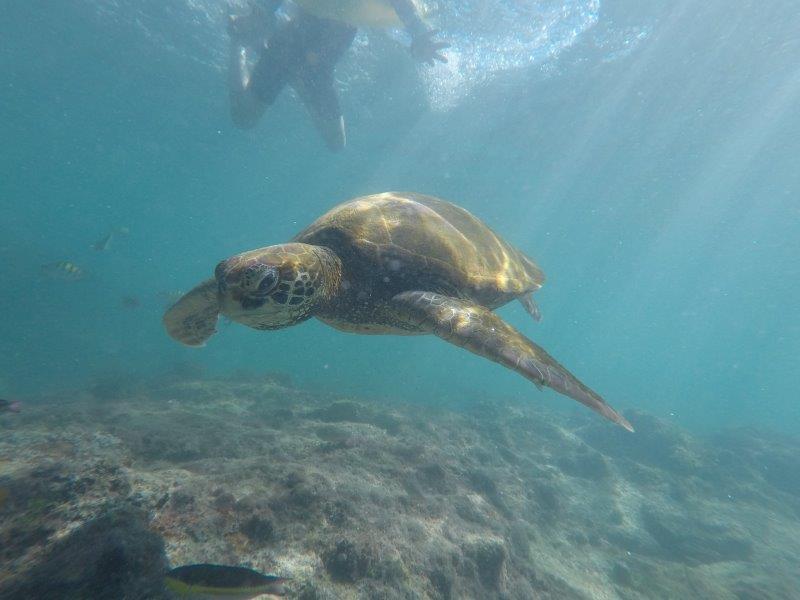 voyage en famille equateur tortue galapagos