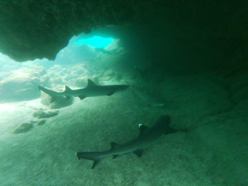 voyage galapagos en famille equateur requins snorkeling