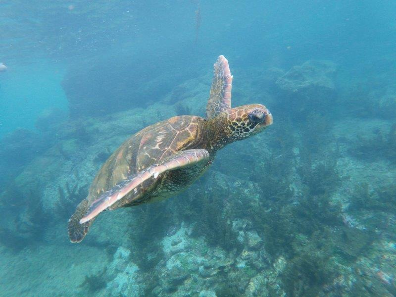 voyage galapagos en famille equateur tortue