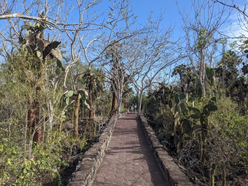 sentier galapagos voyage en famille santa cruz