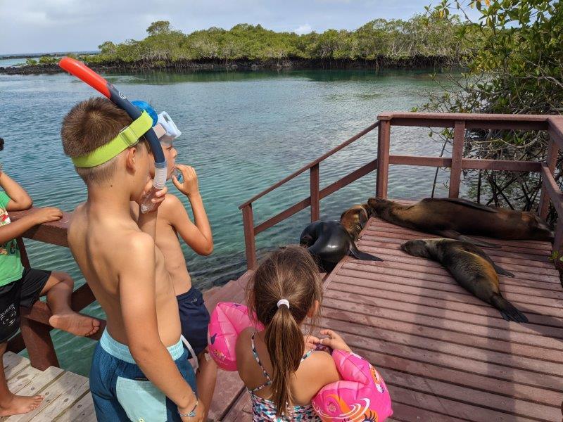 voyage galapagos famille otarie snorkelling