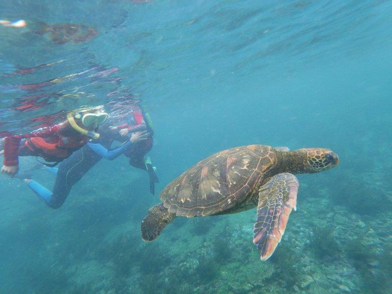 voyage galapagos famille snorkelling tortues los tunelos