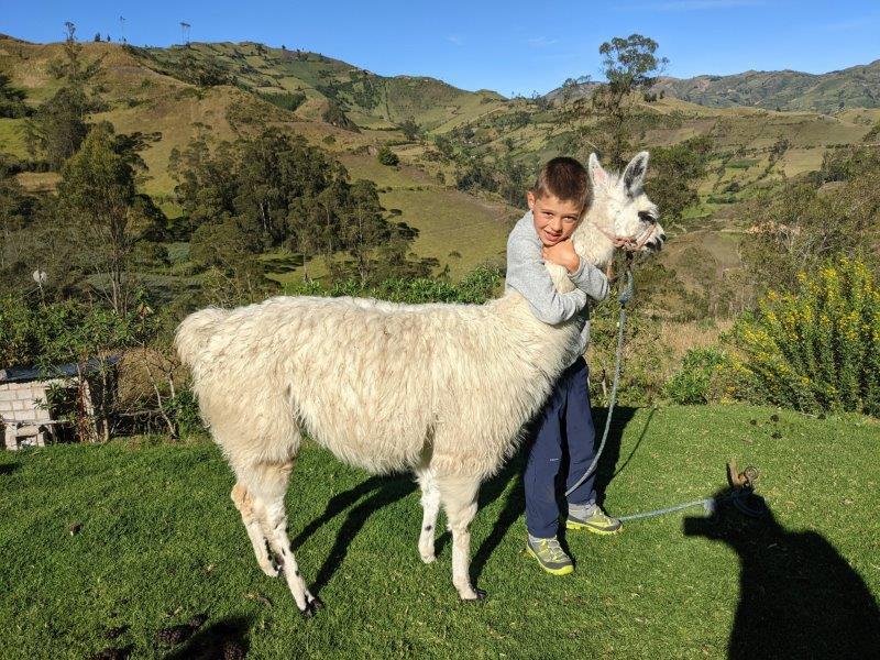 voyage en famille equateur lama montagne