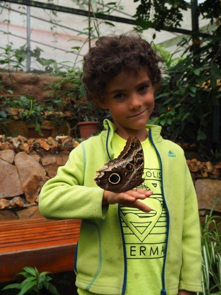 voyage equateur famille camping enfants mindo papillons