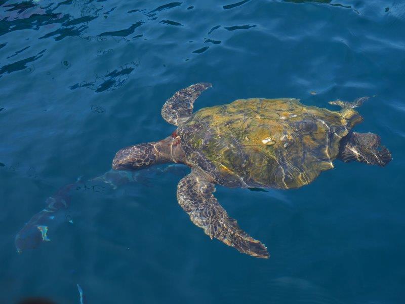 voyage equateur famille camping enfants snorkelling tortue